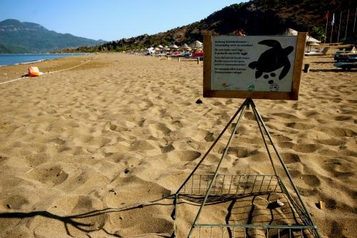 Turtle nest sites.